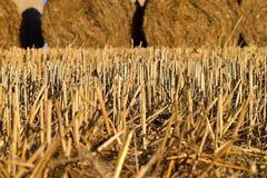Rund packe av sugrör Lantligt landskap med jordbruks- fält Fältet skördas Sun är glänsande Royaltyfri Foto