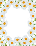 Rund ram av blommor Arkivbild