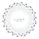 Rund ram av lösa violets som isoleras på vit bakgrund arkivfoton