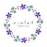 Rund ram av lösa violets som isoleras på vit bakgrund royaltyfria foton