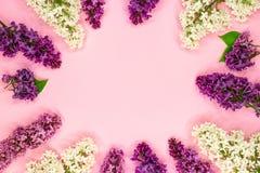 Rund ram av lila blommor, filialer och sidor och kronblad med utrymme för text på rosa bakgrund Lekmanna- l?genhet, b?sta sikt royaltyfria bilder
