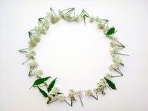 Rund ram av vita blommor arkivfoto