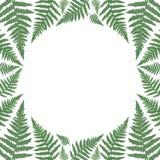 Rund ram med gröna ormbunkesidor vektor illustrationer
