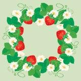 Rund ram med jordgubbar, blommor och sidor Fotografering för Bildbyråer
