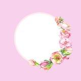 Rund ram med rosa vattenfärgblommor Ram av hundrosflöde Royaltyfria Bilder
