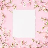 Rund ram med vårblommor och vitboktappningbilen på rosa bakgrund Lekmanna- lägenhet, bästa sikt arkivbilder