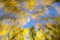 Rund rörelse Bokträdskog i varm signal Royaltyfri Fotografi