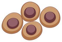 Rund stamcell i brun färg Fotografering för Bildbyråer