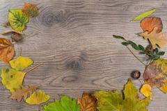 Rund textur för höstblommaram Royaltyfria Foton