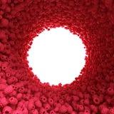 Rund tunnel av hallonet Arkivbild
