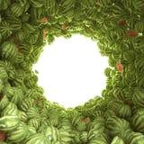 Rund tunnel av vattenmelon Arkivfoton