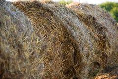 Runda baler av sugrör i fält Royaltyfri Foto