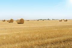 Runda baler av sugrör på fältet, skörd, Ukraina Arkivbild