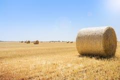 Runda baler av sugrör på fältet, skörd, Ukraina Arkivbilder