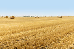 Runda baler av sugrör på fältet, skörd, Ukraina Fotografering för Bildbyråer