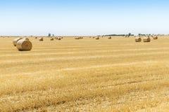 Runda baler av sugrör på fältet, skörd, Ukraina Arkivfoto