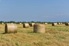 Runda baler av sugrör på klippt kornfält Royaltyfria Bilder