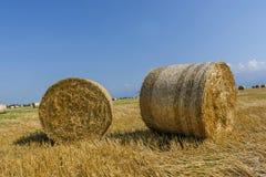 Runda baler av sugrör på klippt kornfält Royaltyfri Foto