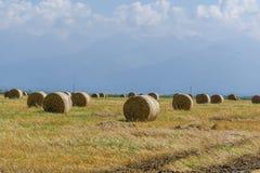 Runda baler av sugrör på klippt kornfält Royaltyfria Foton