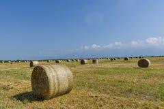 Runda baler av sugrör på klippt kornfält Arkivbild