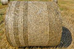 Runda baler av sugrör på klippt kornfält Arkivfoto