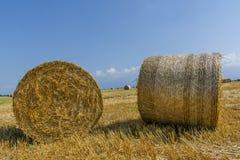 Runda baler av sugrör på klippt kornfält Royaltyfri Bild