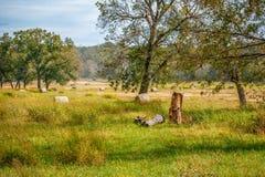 Runda baler i ett fält Royaltyfri Fotografi