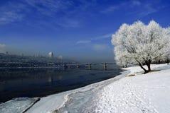 Runda fluffigt ensligt träd mot en blå vinter som står på Arkivbilder