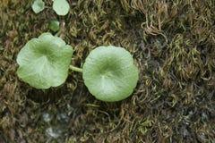 Runda gröna tvilling- blommor royaltyfri fotografi
