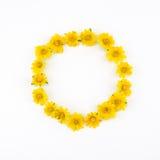 Runda gula Wedelia blommar kransen Royaltyfria Foton