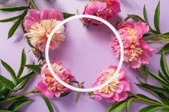 runda ramowy Różowe peonie na purpurowym tle Obrazy Royalty Free