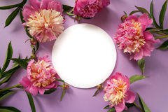 runda ramowy Różowe peonie na purpurowym tle Obraz Stock