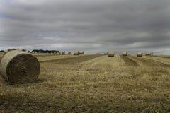 Runda sugrörbaler i ett fält royaltyfri fotografi