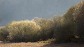 Runda träd, Spanien Royaltyfri Foto