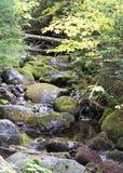 Rundade stenblock bakade ihop med mossa i en ström Royaltyfria Bilder