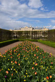 Rundale Palace. Tulips are growing in the garden of Rundale Palace Royalty Free Stock Photo