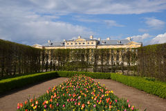 Rundales Palace and tulips. Colourful spring garden full with tulips, daffodils and greens Stock Image