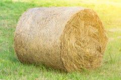 Rundballen Heu unter der heißen Sonne auf dem Feld, Viehbestandzufuhr, Landwirtschaft, Bauernhof, schöner natürlicher Hintergrund lizenzfreies stockfoto
