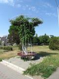 Runde Bank mit Baum in der Mitte stockfoto