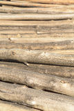 Runde Baumkabel Stockfoto