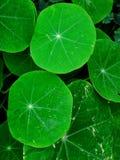 Runde Blätter Stockfotos