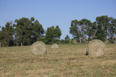 Runde Heuballen auf Feld in Belgrad, Montana Lizenzfreie Stockfotos
