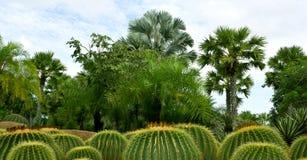 Runde Kakteen und Palmen Stockbild