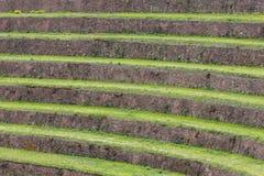Runde landwirtschaftliche Terrassen von Inkas im heiligen Tal, Peru Lizenzfreie Stockfotografie