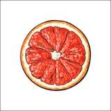 Runde Scheibe der Draufsicht, Hälfte der reifen Pampelmuse, rote Orange stock abbildung