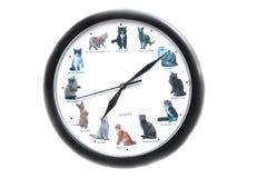 Runde Uhr mit Katzen auf einem weißen Hintergrund lizenzfreie stockfotos