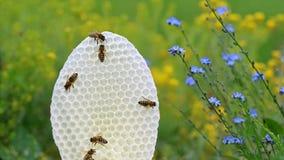 Runde weiße Bienenwabe mit Bienen auf Gelbem und Blau blüht Hintergrund Stockbild