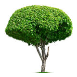 Runder dekorativer Baum Lizenzfreie Stockbilder