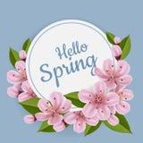 Runder Frühlingsrahmen mit Kirschblume und -blatt Stockfotos
