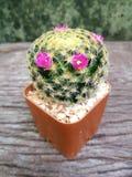 Runder Kaktus Lizenzfreies Stockbild